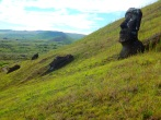 Moai Moai everywhere