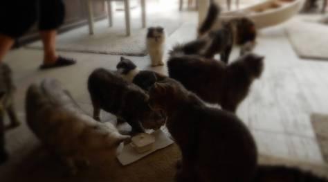 Cat Milk!